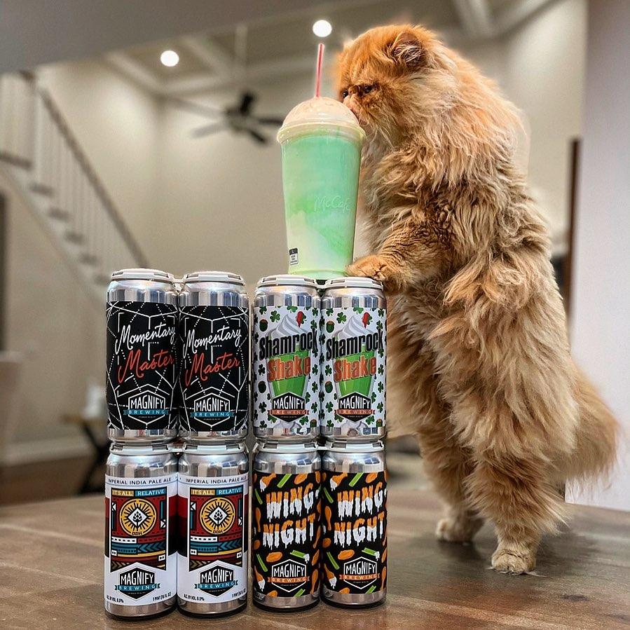 pet craft beer instagram lorenzo the beer cat